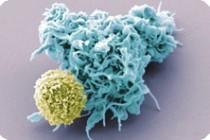 В организме смертельно больных людей обнаружен противораковый белок