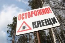 Как избежать укуса клеща в лесу. 8 главных правил от МЧС