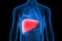 Назван неожиданный способ избежать цирроза и рака печени