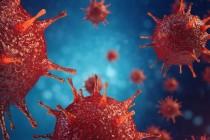 Ученые создали бактерии, способные лечить рак