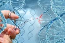 Ученым удалось впервые удалить ВИЧ-инфекцию из зараженной ДНК