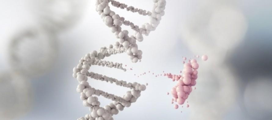 Ученые рассказали, в каких наклонностях виноваты гены