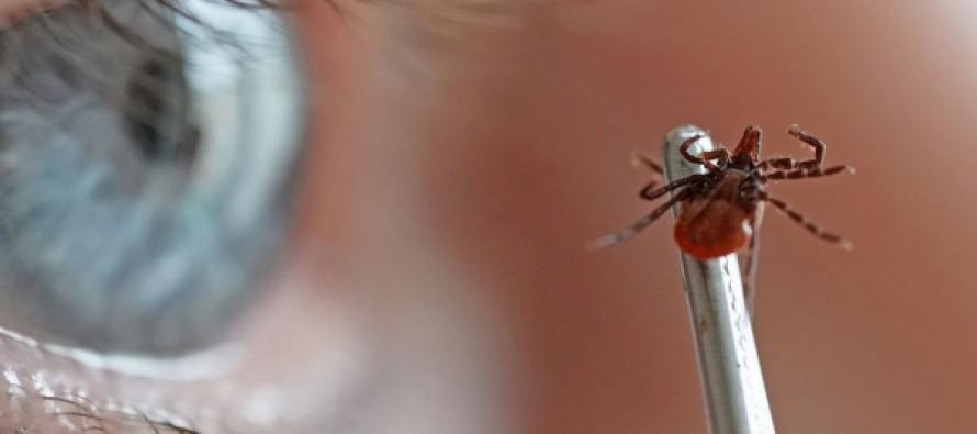 Заслуженный врач России рассказала о пользе укусов клещей